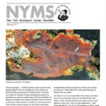 Spring 2017 NYMS Newsletter