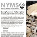 Summer 2013 NYMS Newsletter